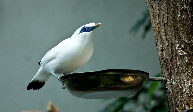 Sabías que las aves necesitan la gravedad para tragar