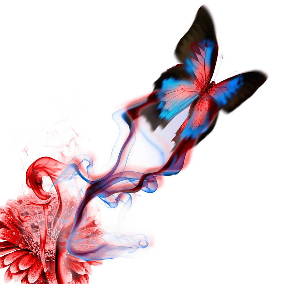 El Efecto Mariposa - Todo lo que necesitas saber sobre este modelo
