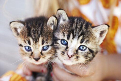 Enfermedades que transmiten las mascotas