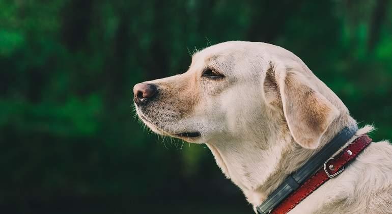 ¿Por qué algunos perros comen caca?