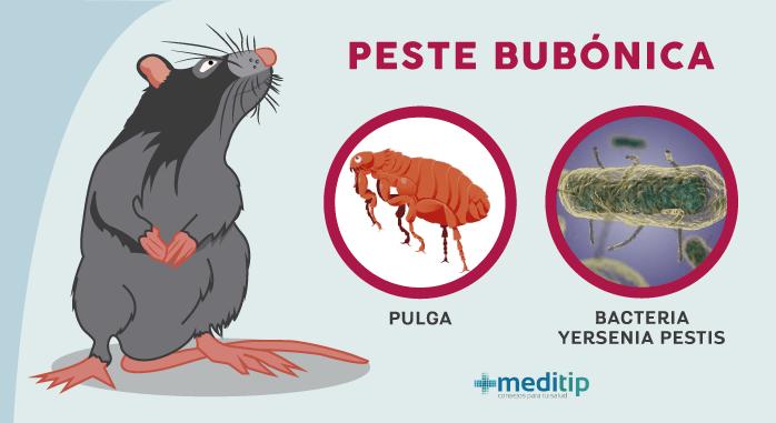 causas de la peste negra