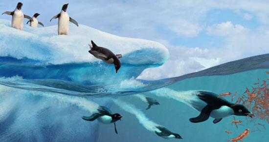pinguinos comiendo enjambres de kril