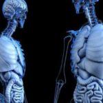 10 hechos asombrosos poco conocidos sobre el cuerpo humano
