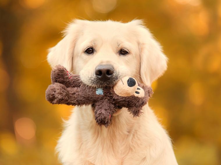 10 de las razas de perros más leales del mundo
