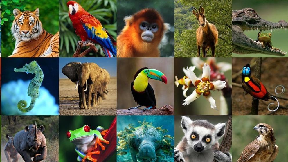 Estos puntos demuestran que los animales son más inteligentes de lo que pensamos