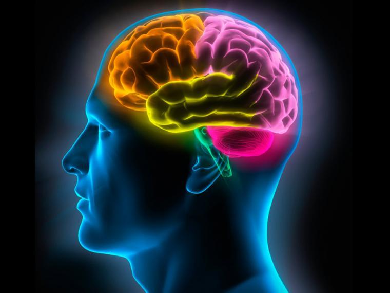 5 maneras en que aprender un nuevo idioma beneficia a tu cerebro