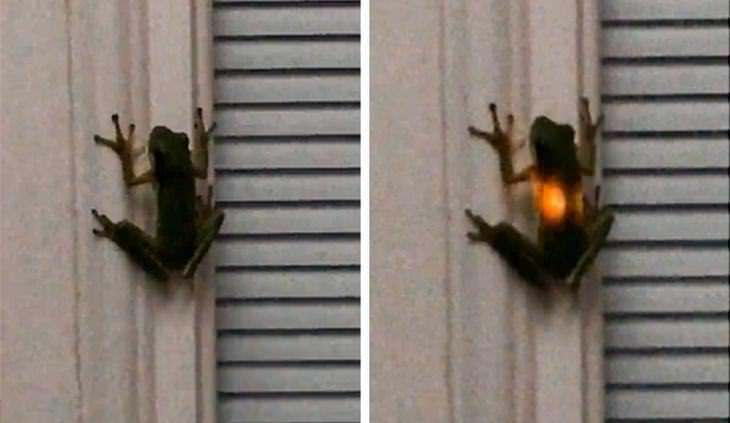 15. Cuando una rana come una luciérnaga.