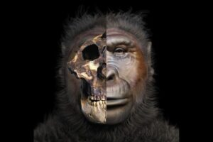 Reconstrucciones realistas de antepasados humanos