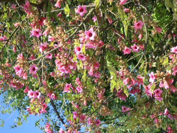 16 plantas con olor a cielo que harán que tu hogar y jardín huelan divino