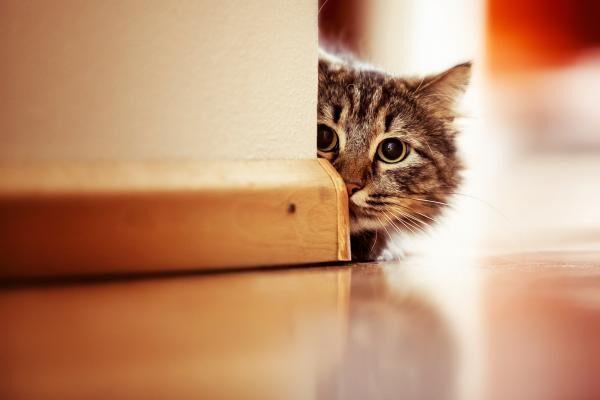 12 cosas que todo dueño de gatos debe tener en cuenta y desconfiar