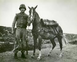Sargento imprudente, el caballo de guerra