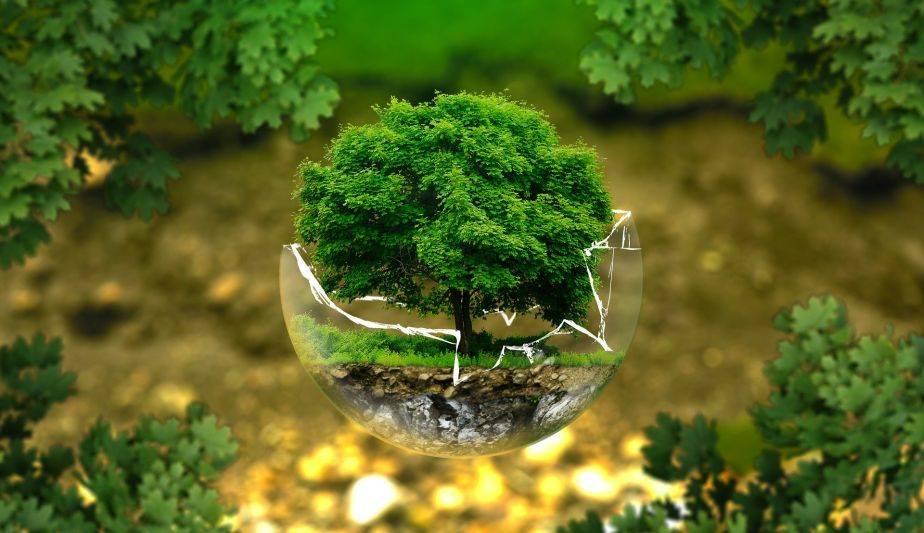15 formas pequeñas pero muy significativas de ayudar al medio ambiente