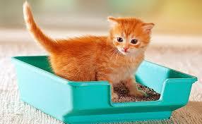 Opta por la arena para gatos biodegradable
